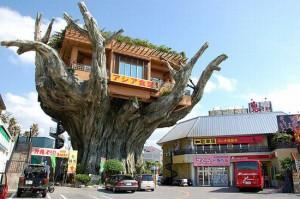 Ресторан на дереве баньяна