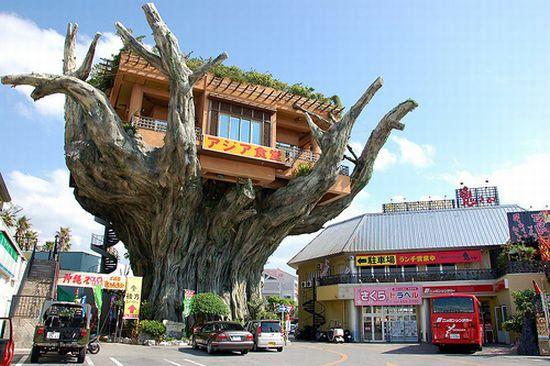 В Японии есть ресторан на высоте 6 метров, прямо на дереве!
