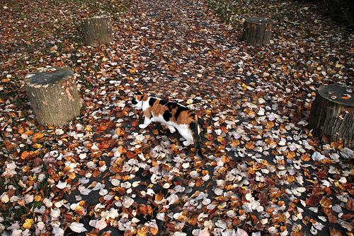 Найди кота на картинках