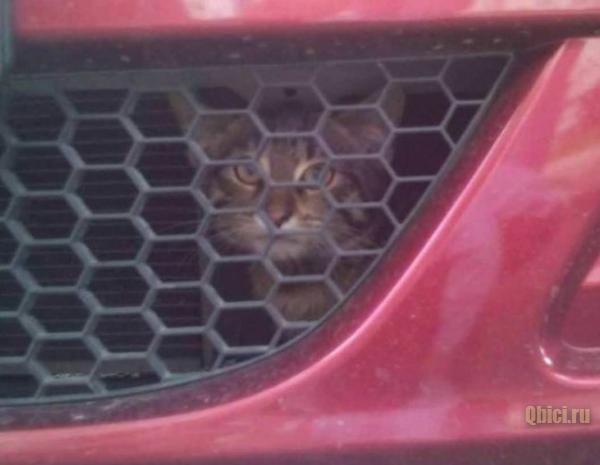 найди кота на картинке с машиной