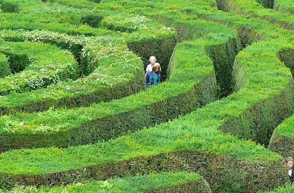 самый длинный лабиринт Longleat Hedge Maze