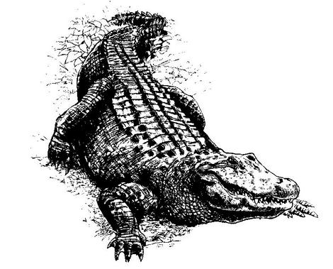 10 фактов об аллигаторах и крокодилах