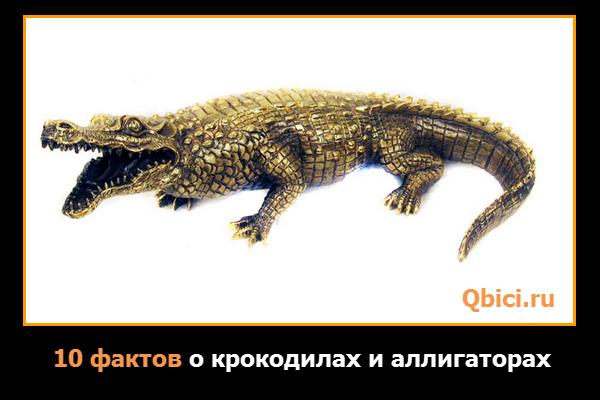 10 фактов о крокодилах и аллигаторах
