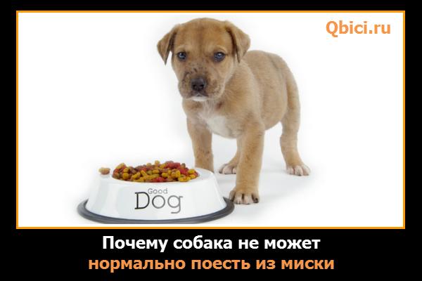 Почему собака таскает еду из миски