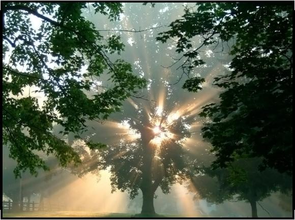 Свет отражается от пыли