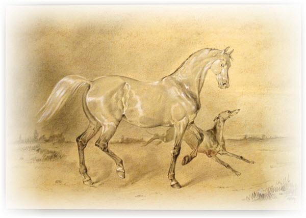 Кто быстрее лошадь или собака?