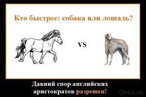 loshad-vs-sobaka