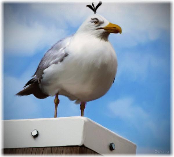 Фото белой птицы из Angry Birds