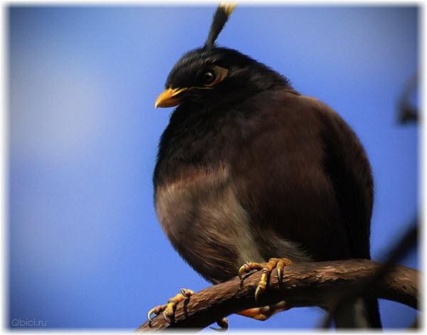 Фото черной птицы-бомбы из Angry Birds