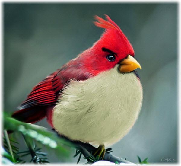 Фото красной птицы из Angry Birds