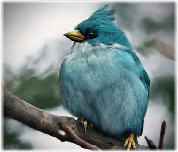 Фото синей птицы из Angry Birds