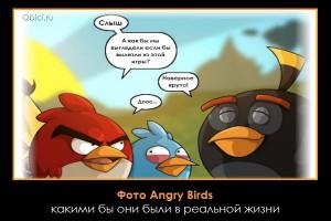 Фото Angry Birds в реальной жизни