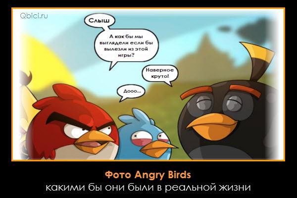 Фото Angry Birds – какими бы они были в реальной жизни