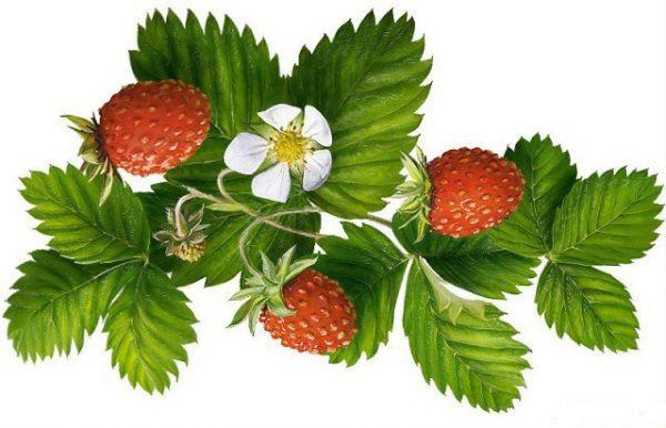 Домашняя косметика на основе ягод земляники