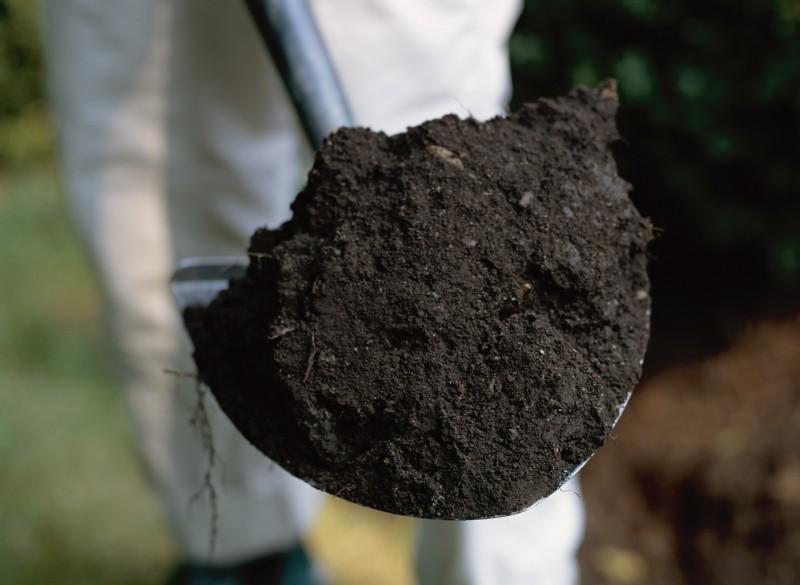 Низкая плодородность грунта: как решить проблему