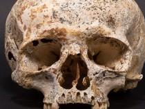 Археологи воссоздали портрет девушки, погибшей в Шотландии 3700 лет назад