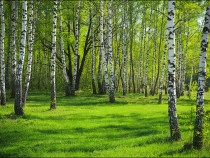 Экономика леса: на службе государству и гражданам