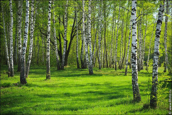 Экономика леса