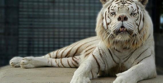 ГМО животные шокируют мир