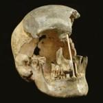 Старейшая ДНК представителей вида «хомо сапиенс» говорит о его близкой связи с неандертальцами
