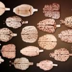 Исследование более 1400 видов может изменить наше понимание интеллекта