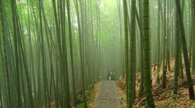 Какие тайны скрывает китайский бамбук?