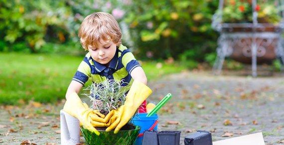 Что нужно знать об удобрениях: памятка для садовода
