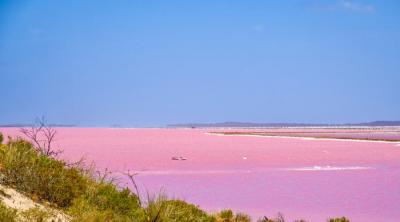 Как создать на подоконнике австралийский пейзаж с розовым озером?